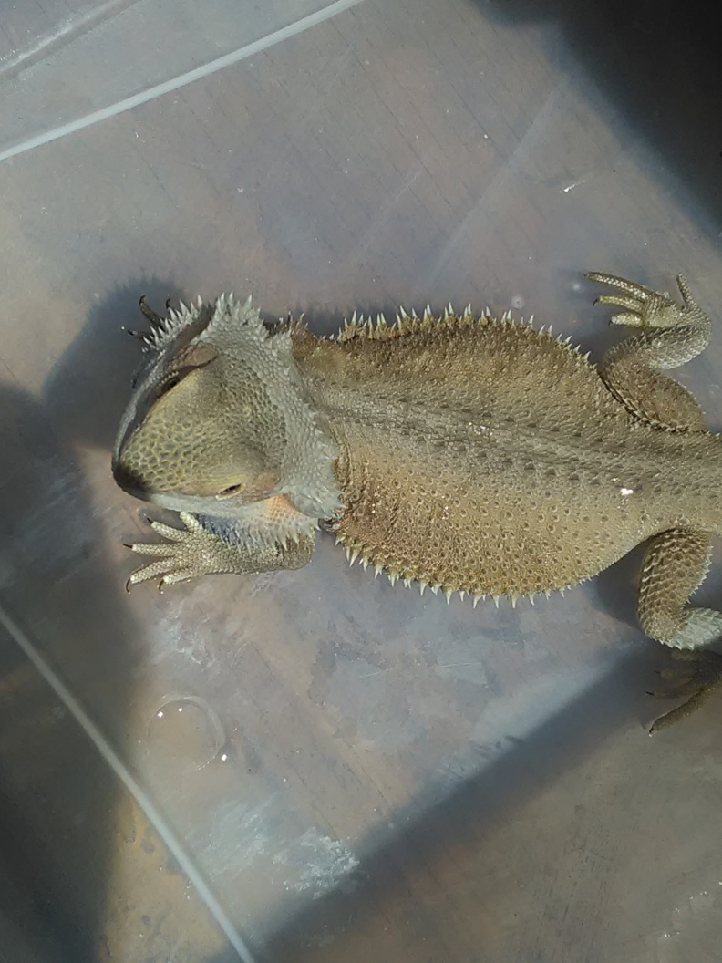 For Sale FREE Baby Hypo Leather with Male Witblits Bearded