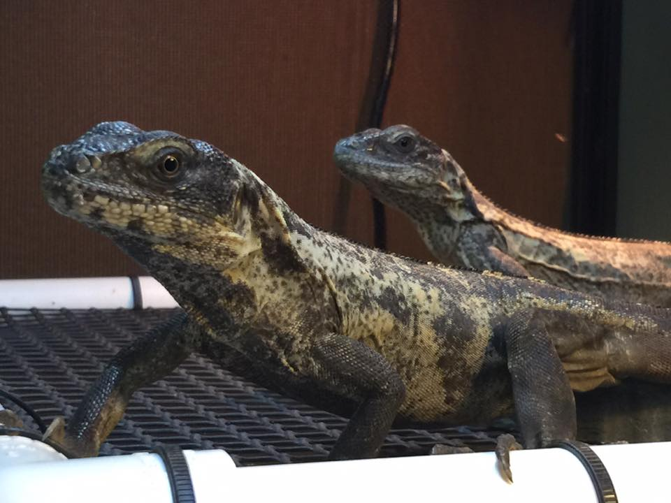 underground reptiles free shipping code