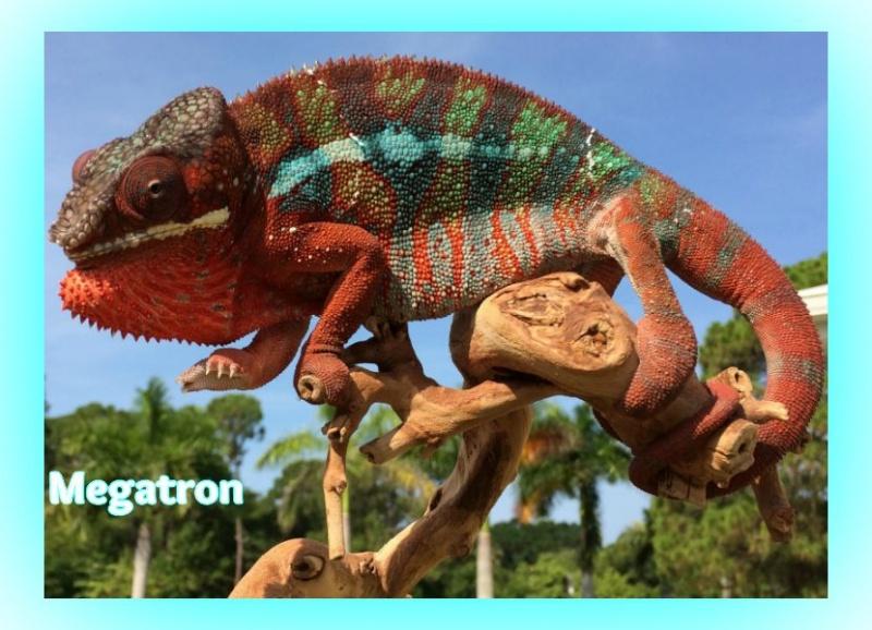 Name:  PantherMegatron.jpg.jpg Views: 116 Size:  168.5 KB