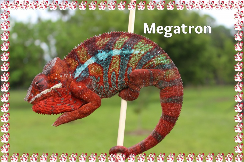 Name:  megfa.jpg Views: 146 Size:  203.9 KB
