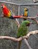 Macaws_2.jpg