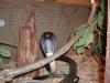 snakes_032.jpg