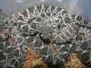 Eastern_Diamondback_babies_born_9-6-08_003.jpg