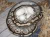 Bella_and_Eggs_4-29-2013_1200x900.png