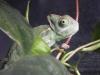 Chameleon_003.jpg