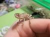 Chameleon_023.jpg