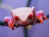 RETF_Albino_Female_01C.jpg