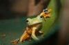 blue_web_frog.jpg