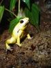 dans_frogs_02_04_06_006.jpg