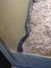 snake6.jpg