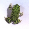 Green_Toad_2_of_3.jpg