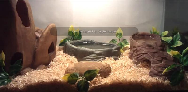 Kết quả hình ảnh cho setup for snake