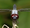 dragonfly002.jpg
