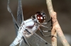 dragonfly003.jpg
