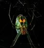 spider001.jpg