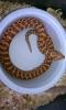 new_snake2_033.jpg