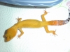 Gecko_shoot_11-06-05_039.jpg