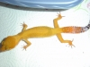 Gecko_shoot_11-06-05_040.jpg