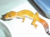 Gecko_shoot_11-06-05_042.jpg