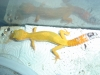 Gecko_shoot_11-06-05_044.jpg