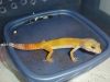 Gecko_shoot_11-06-05_046.jpg