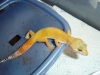 Gecko_shoot_11-06-05_047.jpg