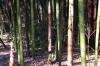 bamboo_003.jpg
