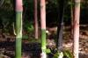 bamboo_black_001.jpg