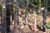 bamboo_black_002.jpg