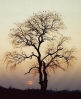sunset_tree.jpg