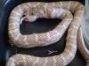 misc_snakeroom_0091.jpg