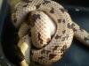 misc_snakeroom_051.jpg